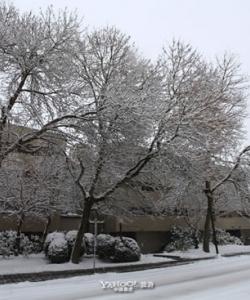 加拿大迷人的雪景