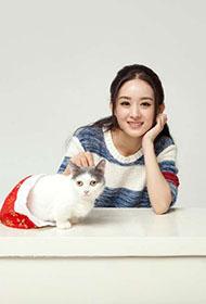 赵丽颖携萌猫演绎宠物情缘写真