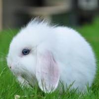 胖乎乎可爱的垂耳兔子qq头像大全