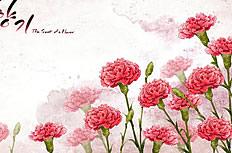 唯美康乃馨画图片