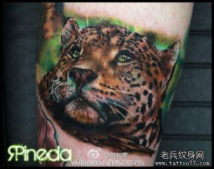 腿部一款经典潮流的彩色豹头纹身图案